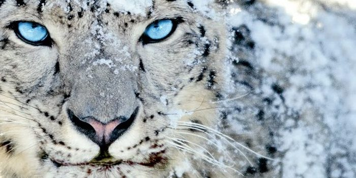 Emailchemy 13.2.11 fixes Mac file dialogs; last version for Snow Leopard